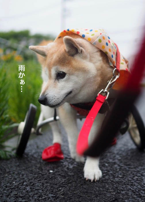 5日夕ブログ8