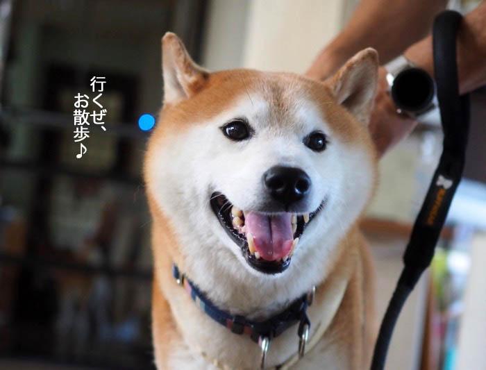 10日夕ブログ2