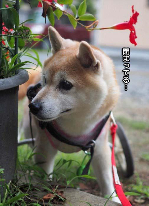 13日夕ブログ3