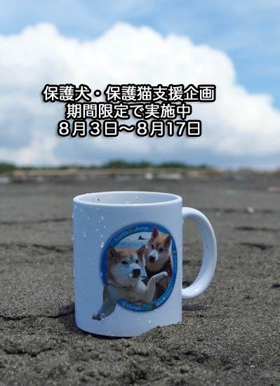 7日夕ブログ7