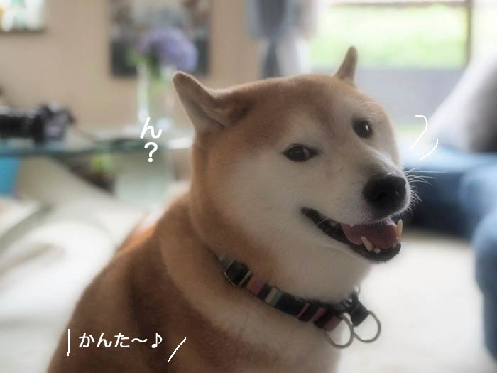 21日夕ブログ2