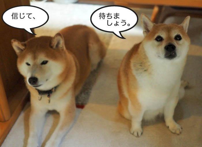 16日夕ブログ6