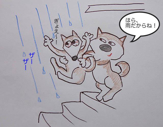 1タロに雨