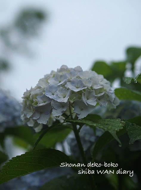 21日用雨ブログ1