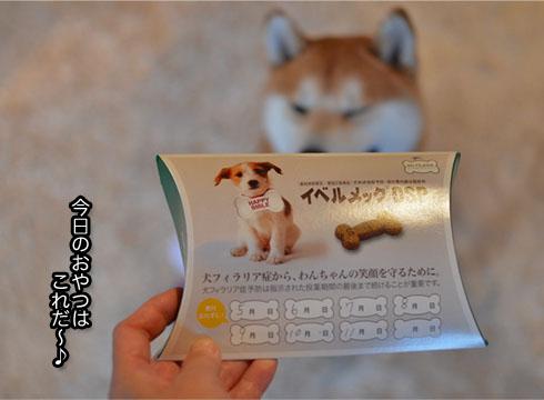 30日ブログ5.jpg