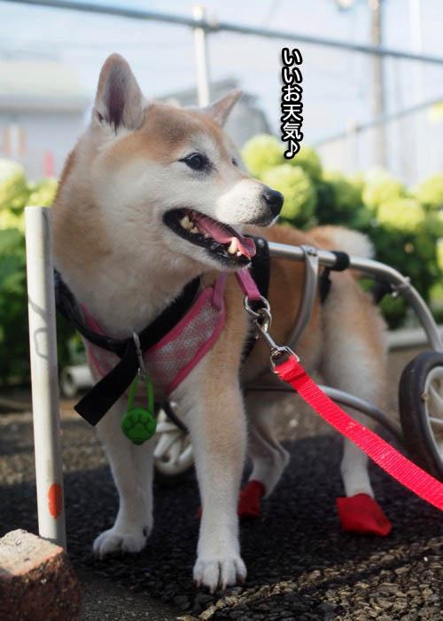 11日夕ブログ6