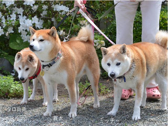 2犬紹介8