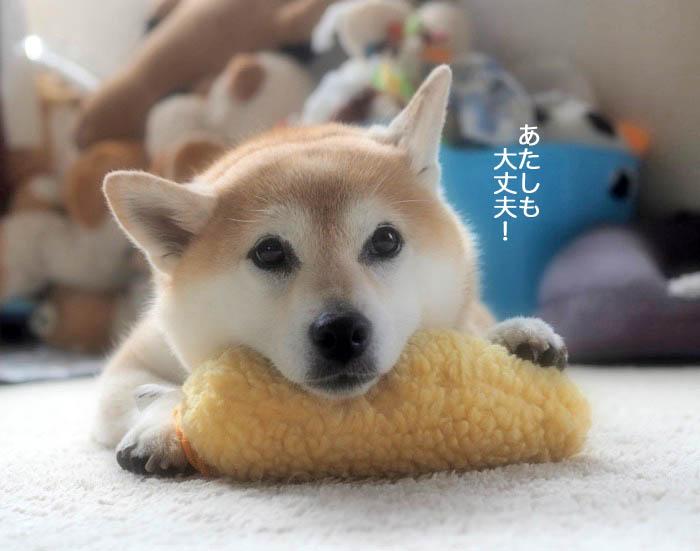 21日夕ブログ6