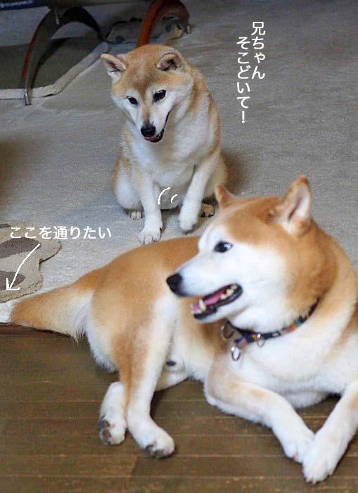 9日夕ブログ3