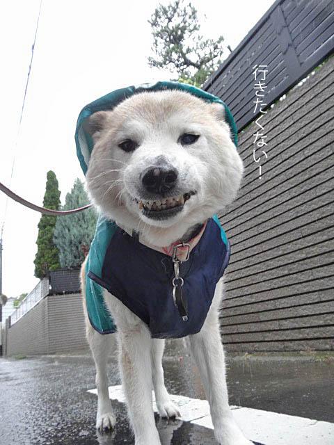 21日用雨ブログ4