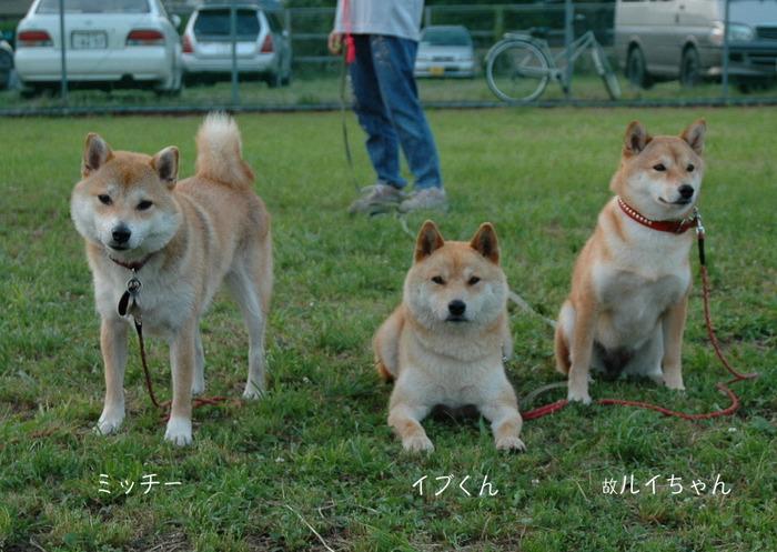 2犬紹介4