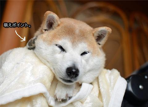 29日ブログ14.jpg