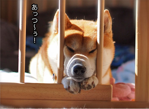 20日ブログ7.jpg