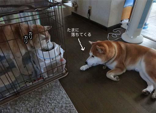 26日ブログ4.jpg