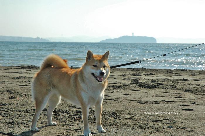 2犬紹介2