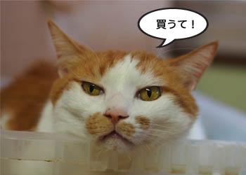 30日ブログ17.jpg