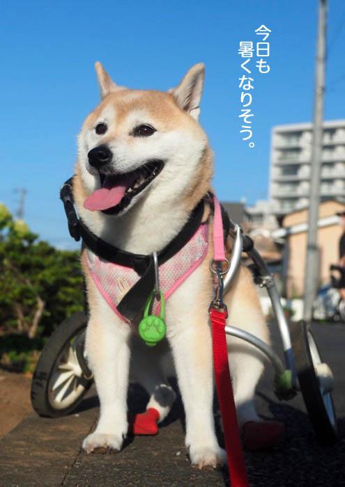 5日夕ブログ2