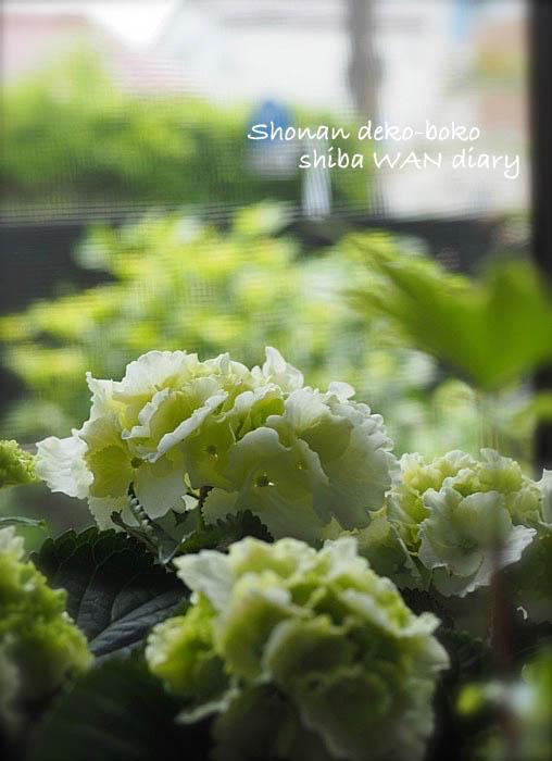 18日夕ブログ1