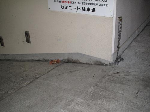 駐車場カニ1