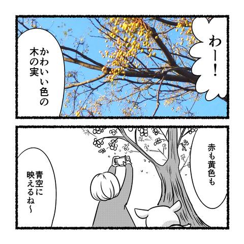 autumn-star_003