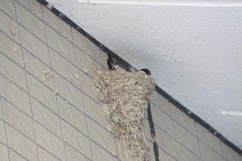 つば値の巣
