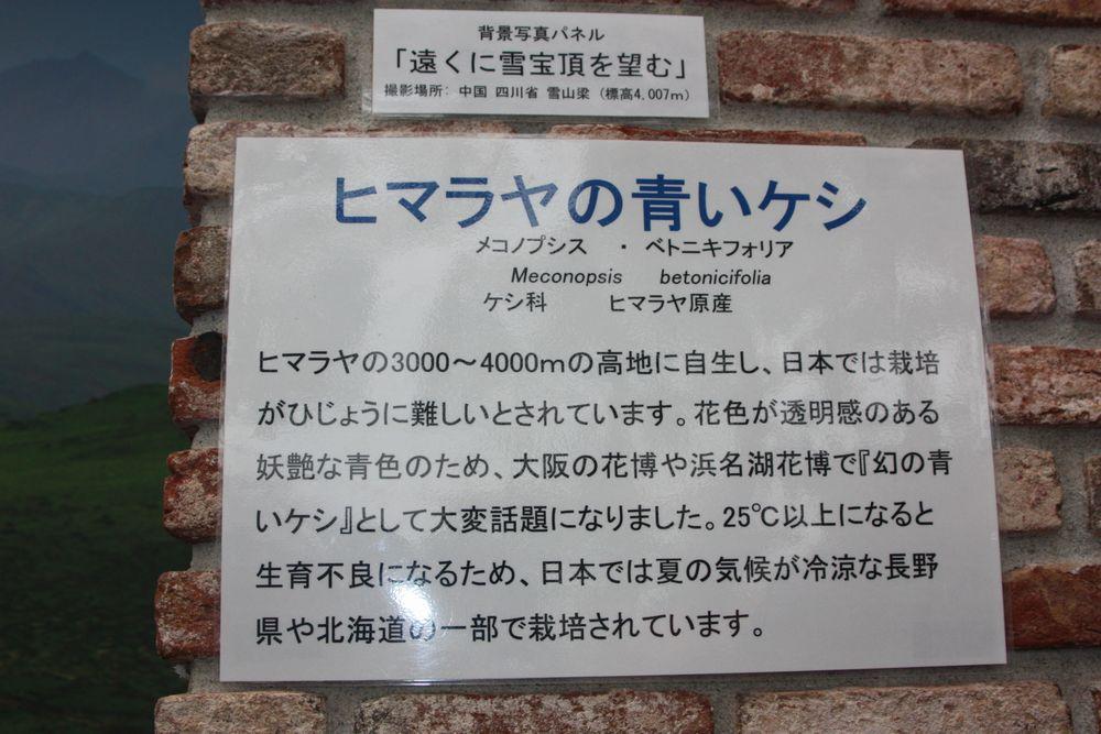 IMG_6750
