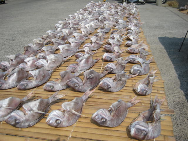 おんべ鯛(神明神社)