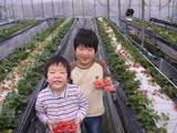 20080203イチゴ狩り元気村