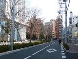 蒲田の名所?桜並木?