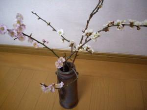 中島さんの梅