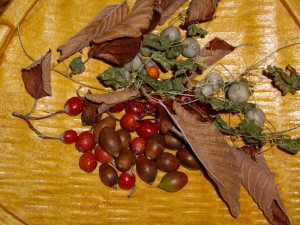 秋の木の実 拡大版