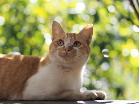 猫撮影用にオリンパス M.ZUIKA DIGITAL 45mm f1.8という新しいレンズをゲットしました!
