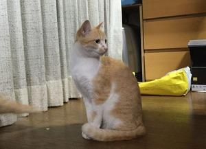 「乙女」という名の肝の据わった猫