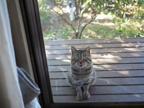 「僕だってお家に入りたい」しまくろう