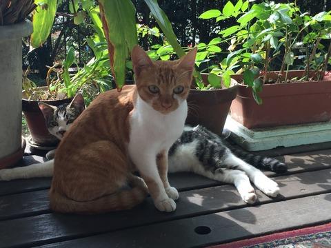 母性溢れる猫「ちゃちび」