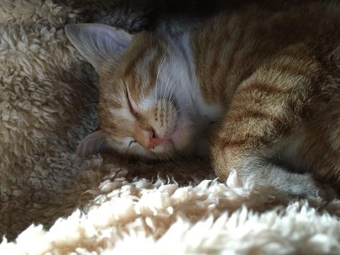 寝顔が可愛すぎる子猫たち