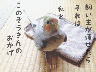 ダイエットになる?止むを得ずの雑巾がけに筋トレ効果があった話