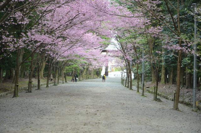 近江神宮に行ってきました。特にちはやふるのグッズとかはなかったです。行く時間が遅かったので人も少