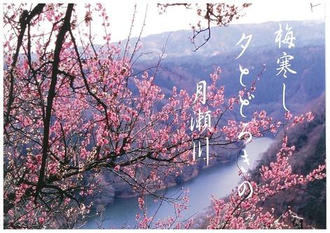 Tsukigase_cherry_blossom_2015
