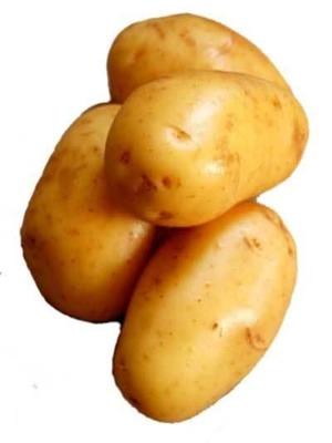 ziemniak1