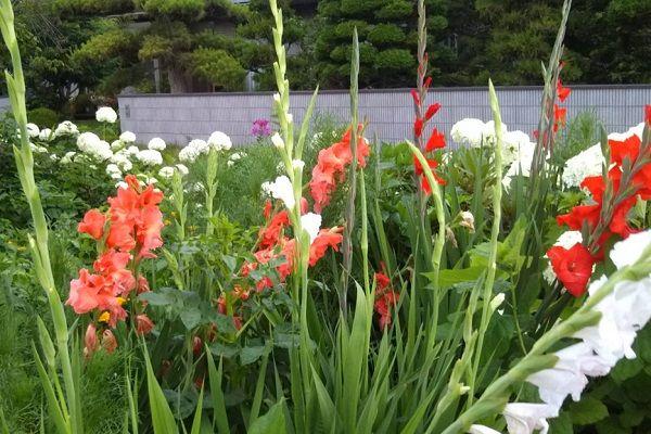 jene garden 02