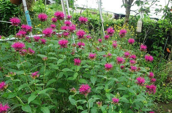 june garden 10