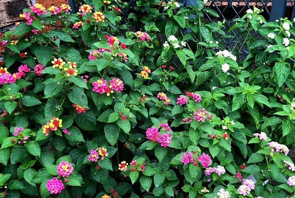 june garden 03