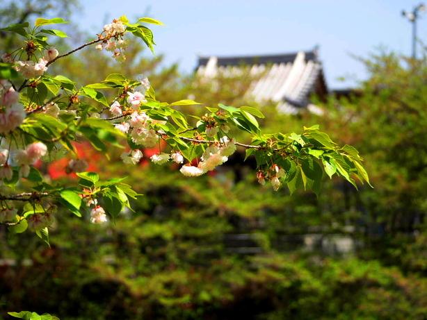 今泉名水桜公園01
