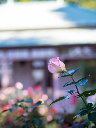 八幡山洋館6