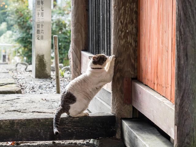 大日堂・猫4