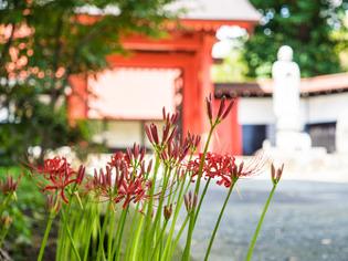 寿徳寺境内から04