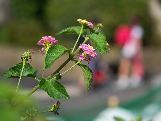 花と蝶11