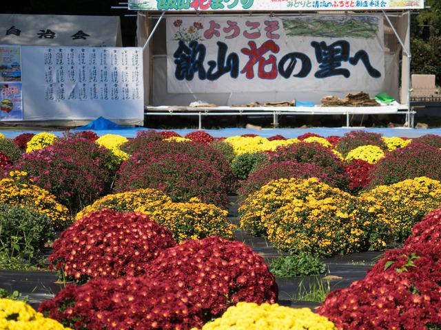 厚木飯山ざる菊19