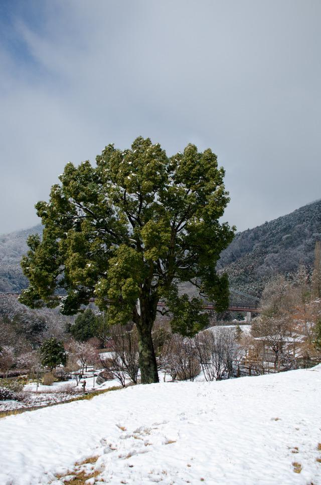 雪景色106